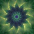 The Flower by Ricky Barnard