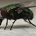 The Fly Macro by Michael Ver Sprill