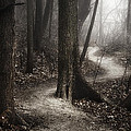 The Foggy Path by Scott Norris