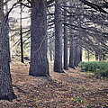 The Forest Of A Thousand Stories by Guido Montanes Castillo