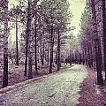 The Forest Road Retro by Guido Montanes Castillo