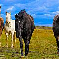 The Four Musketeers by Amanda Smith