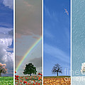 The Four Seasons by Edmund Nagele