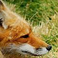 The Fox 7 by Ernie Echols
