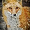The Fox 8 by Ernie Echols