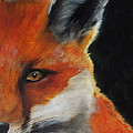 The Fox by Kathy Laughlin