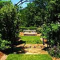 The Garden Bench by Venus