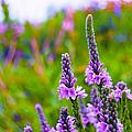 The Garden Palette by Christi Kraft