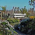 The Garden Path by Skip Willits