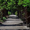 The Garden Pathway 2 by Earl Johnson