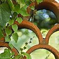 The Garden Wall by Margie Hurwich