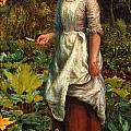 The Gardeners Daughter by Arthur Hughes