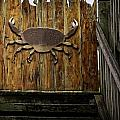 The Gate Keeper by Image Takers Photography LLC - Carol Haddon