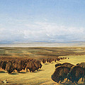 The Gathering Of The Herd by William Jacob Hays