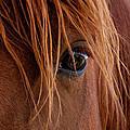 The Gentle Eye  by Eric Rundle