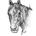 The Gentle Eye Horse Head Study by Renee Forth-Fukumoto