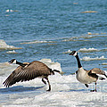 The Getaway Or Silly Goose by Eric Curtin