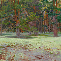 The Glade Covered With A Moss by Victoria Kharchenko