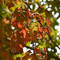 The Glory Of Autumn by Maria Urso