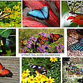 The Glory Of Butterflies 3 by Diane E Berry