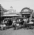 The Goat Carriages Coney Island 1900 by Steve K