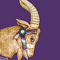 The Goat Who Likes Purple by Barbara McMahon