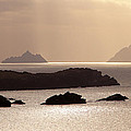The Gold Skelligs by Mark Callanan