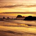 The Golden Coast by Darren  White