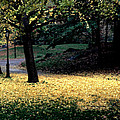 The Golden Gingko Path by Tom Wurl