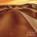 The Golden Hour Anza Borrego Desert by Bob and Nadine Johnston