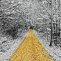 The Golden Path  by FL collection