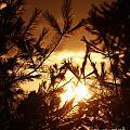 The Golden Sunset by Chet B Simpson