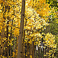 The Golden Tree by Eric Rundle