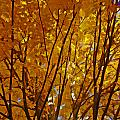 The Golden Tree by Jayne Carney