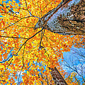 The Gorgeous Fall by Kimberleigh Ladd