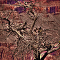 The Grand Canyon Viii by David Patterson
