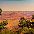 The Grand Canyon Vintage Americana Iv by David Patterson