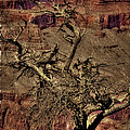 The Grand Canyon Vintage Americana V by David Patterson
