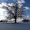 The Grand Tree Season Winter by Gerald Strine