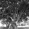 The Grandmother Tree by Sarah Lamoureux