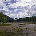 The Great Alaskan Wilderness by Kim Hojnacki