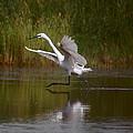 The Great Egret by Leticia Latocki