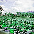 The Great Lotus Flower Pond by Jeng Suntorn niamwhan