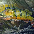 The Great Peacock Bass by Terry  Fox