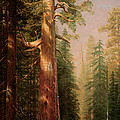 The Great Trees Mariposa Grove California by Albert Bierstadt