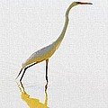 The Greater Egret With Style by Tom Janca