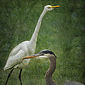 The Greats - Birds That Is... by Belinda Greb
