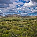The Green Desert by Jim Mattern