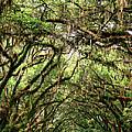 The Green Mile Savannah Ga by William Dey