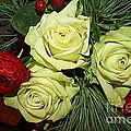 The Green Roses Of Winter by Dora Sofia Caputo Photographic Design and Fine Art